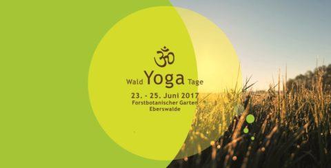 Wald Yoga Tage Eberswalde
