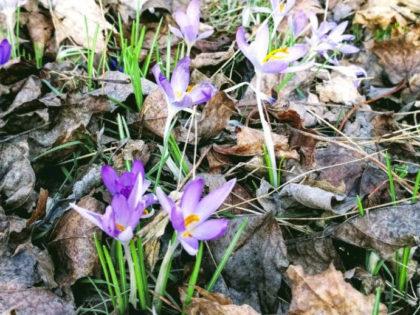 Frühlings-Pause | 25.03. – 08.04.18