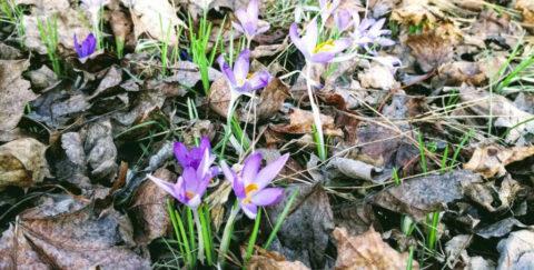 Frühlingspause